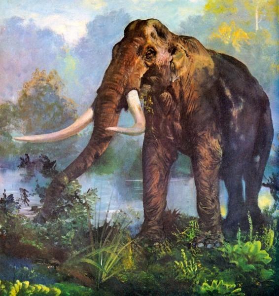 Южный слон